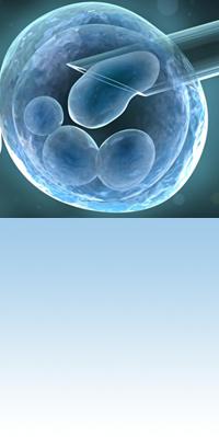 SafeCord_cellule_staminali_04